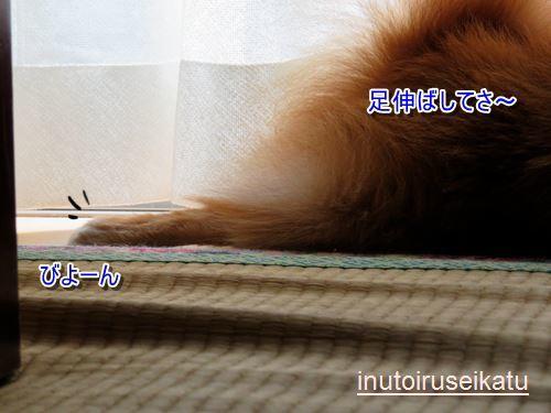 s-IMG_2403.jpg