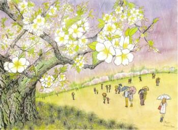 雨の大島桜2016