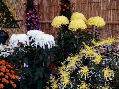 松本市民祭 (114)