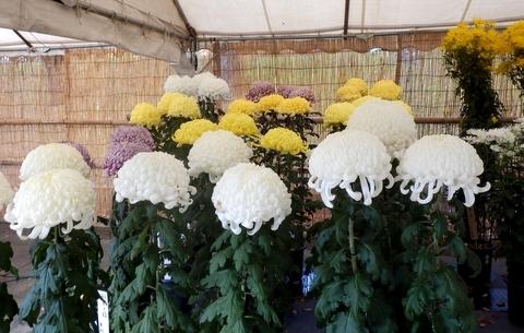 松本市民祭 (130)