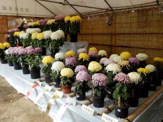 松本市民祭 (133)