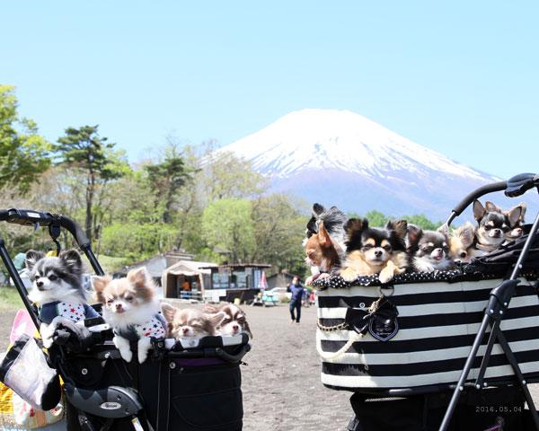 富士山とみんな