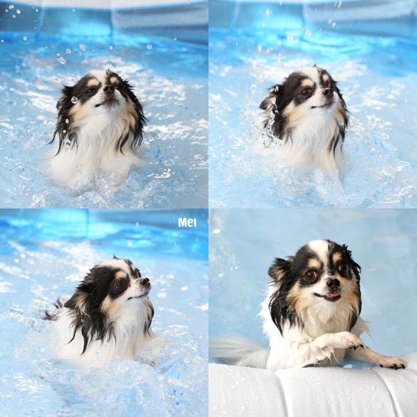 メー子の泳ぎ