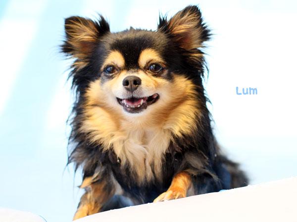 lum1.jpg
