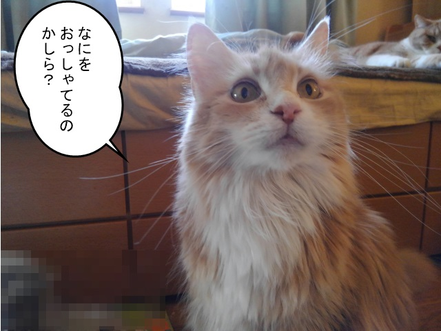 20160608めい