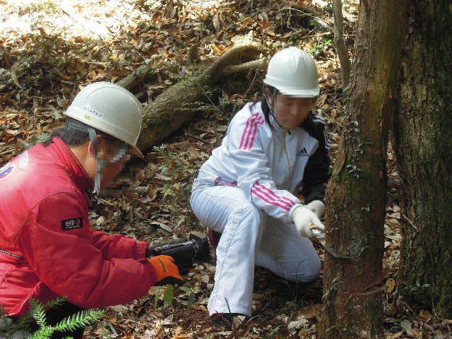 生木の伐採