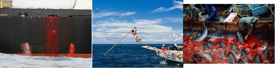 甲板から海に流れ落ちるクジラの血