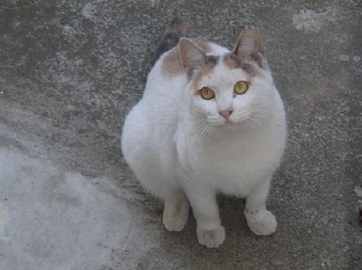 猫のしろみちゃん