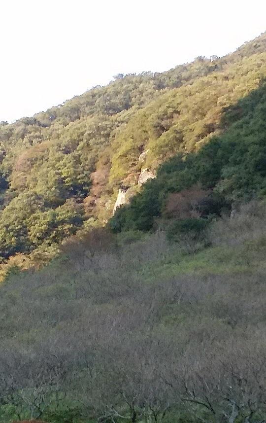 幕山公園から正面壁
