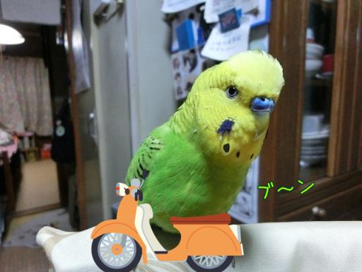 せいちゃんバイク