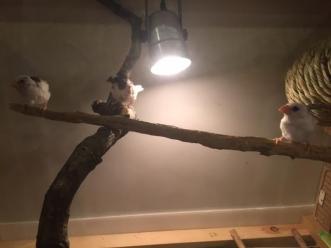 自作鳥かご