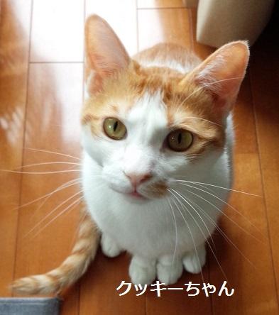 クッキーちゃん 猫