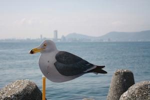 高松港~女木港4