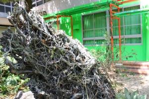 八幡神社と小学校15