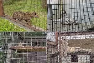 16砥部動物園2