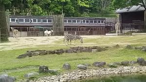 16砥部動物園3