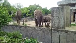 16砥部動物園4