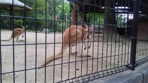 16砥部動物園8