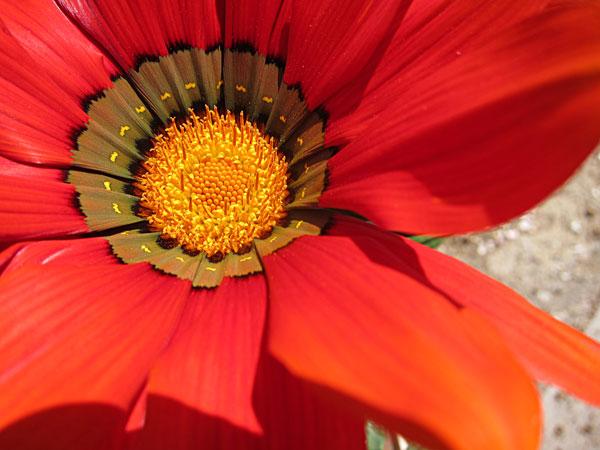 花盛りー1