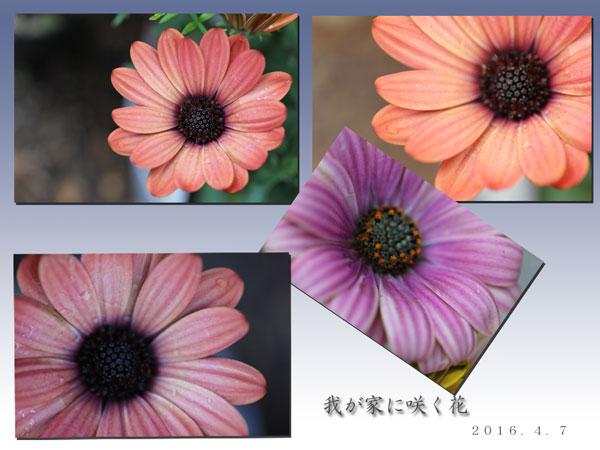 花盛りー2