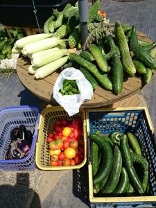 本日収穫した野菜
