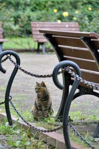 October Cat(s) Tokyo