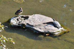 Bird and Turtle