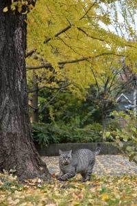 November Cat(s) Tokyo
