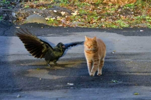 Chappy The Cat and Crow