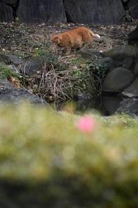 December Cat(s) Tokyo