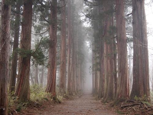 togakusi-shrine-okusha8.jpg