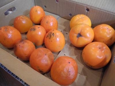 20161109富有柿と百名柿