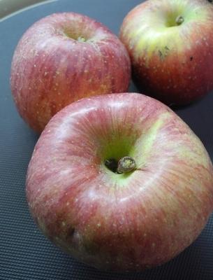 20161128差し入れリンゴ