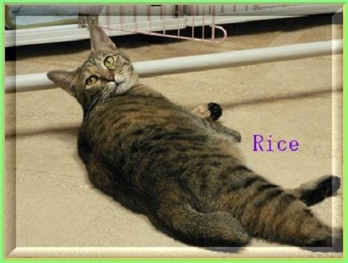 rice11_201611291552491d5.jpg