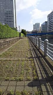 20160610通勤路(その3)