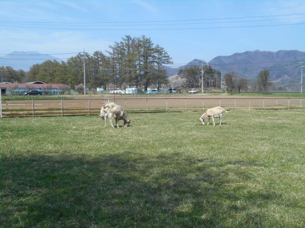 羊さんと平尾山