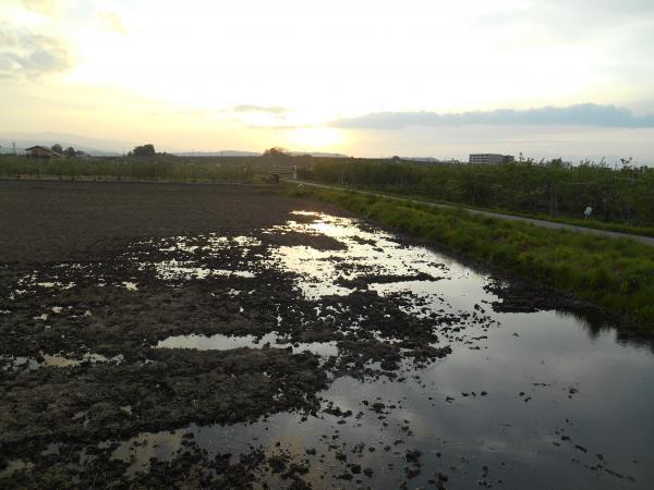田んぼに水1