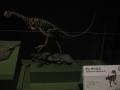 チレサウルス
