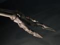スピノサウルスの後肢の指