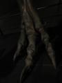 ティラノサウルスの後肢の指