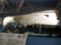 スピノサウルス吻部1