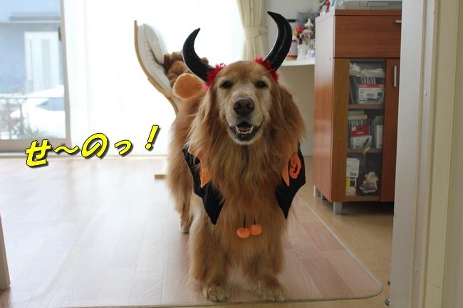きなちゃん ハロウィン 004