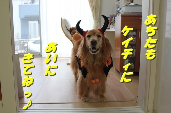 きなちゃん ハロウィン 003