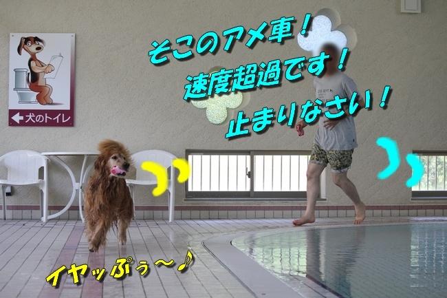 プールとジュリー 008