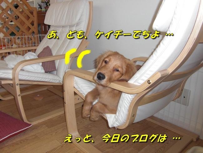 CIMG0884.jpg