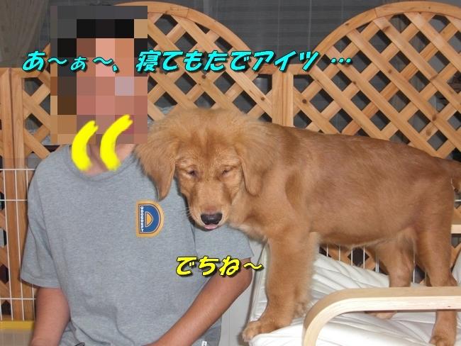 CIMG0899.jpg