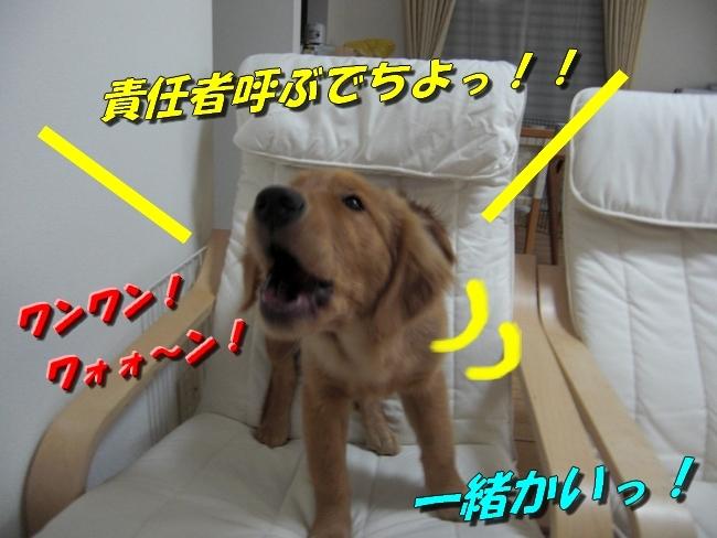 CIMG0987.jpg