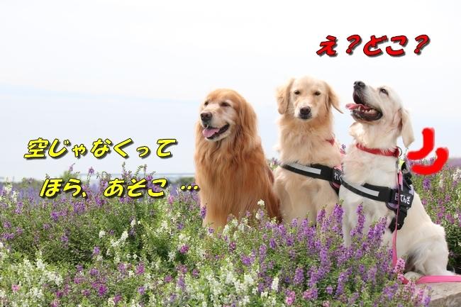 IMG_6972.jpg
