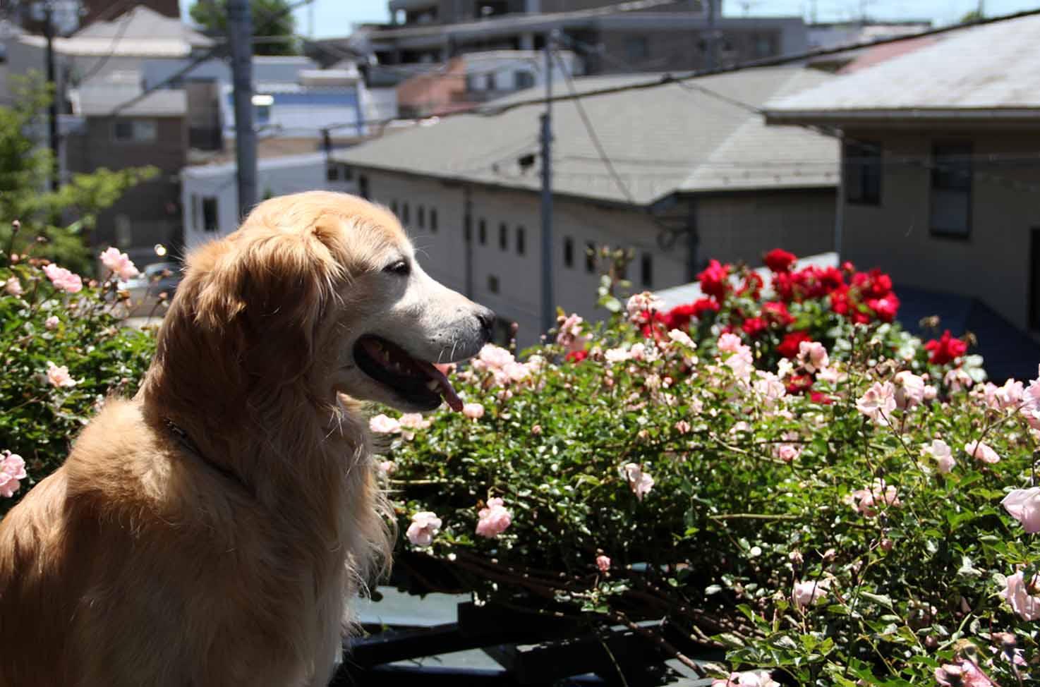 屋根上の犬とFジュランビル(1)