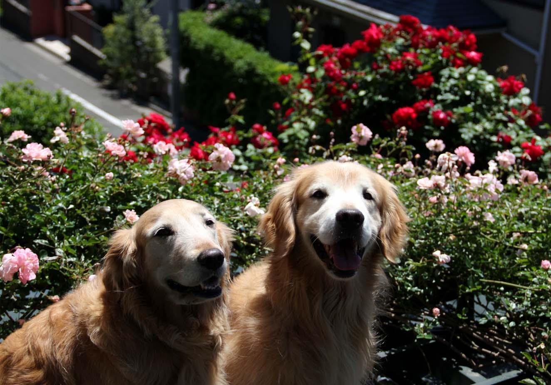 屋根上の犬とFジュランビル(6)